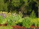 Children's Garden 4.jpg